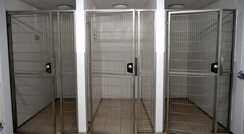 Case Study - Dogs Trust - Dublin (5)