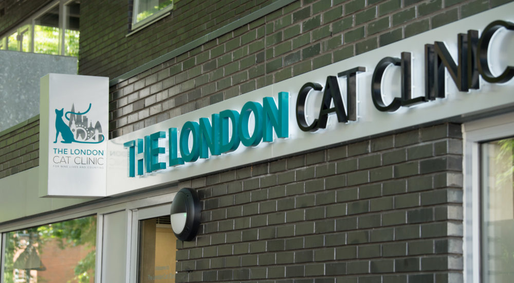 Case Study - London Cat Clinic (13)