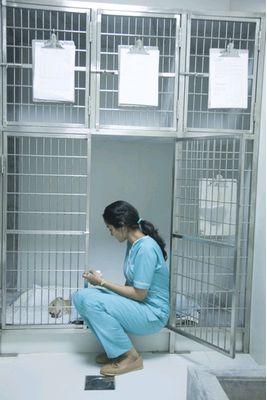 CV Cat and Dog Ward
